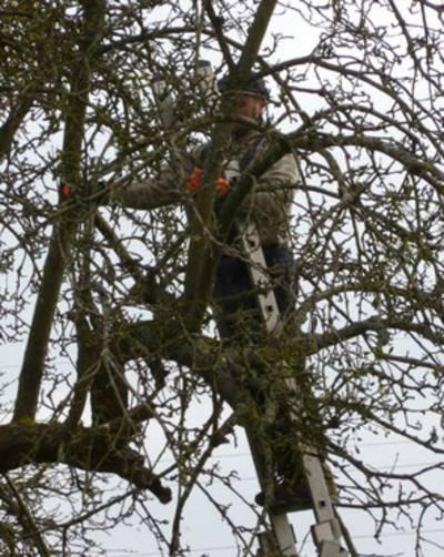 Obstbaumschnitt - Altbaumschnitt